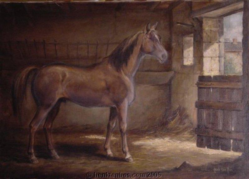 paard_op_stal_002.jpg